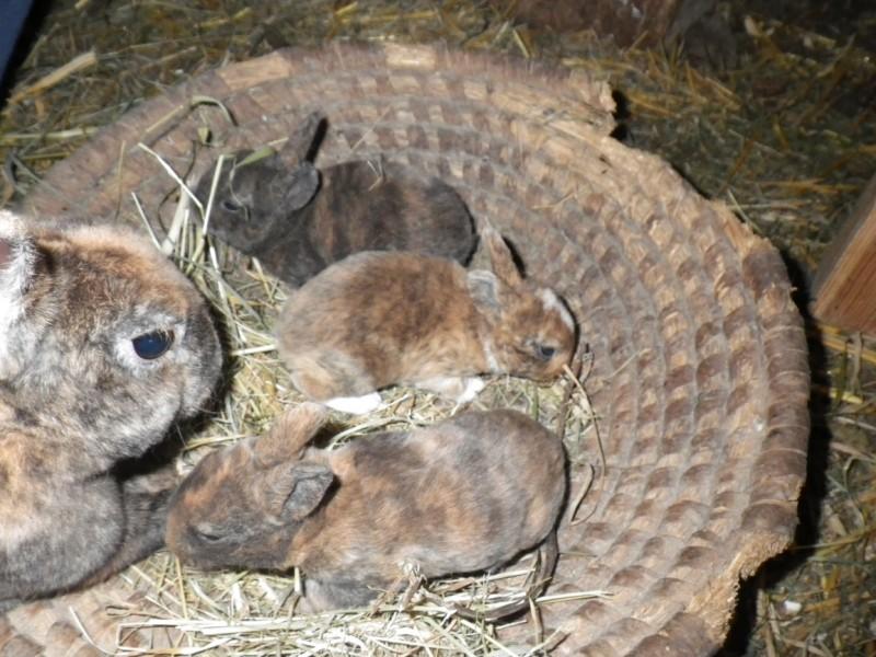 Matka s mláďaty