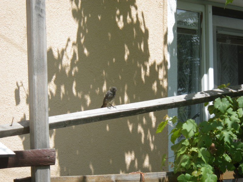 reheček před oknem